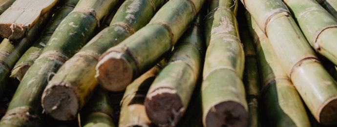 NTG24 - Zuckerpreis profitiert von Kältewelle