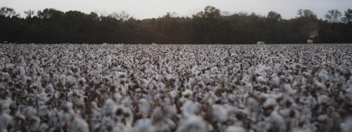 NTG24 - Preis für Baumwolle nähert sich kritischem Ausbruchs-Niveau