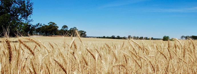 NTG24 - Weizenpreis auf dem höchsten Stand seit Februar 2013